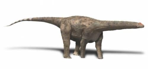 Hypselosaurus BW.jpg