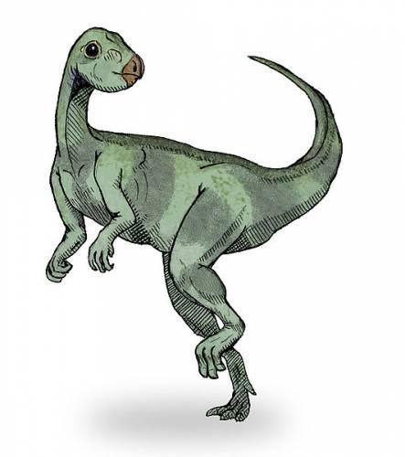 Qantassaurus sketch1.jpg